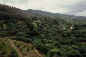 Satellitteknologi ger ny bild av avskogningen