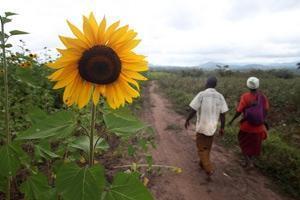 FAO, IFAD och WFP når 22 miljoner människor med jordbruksstöd från EU