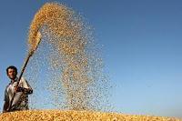 Livsmedelspriserna i stort sätt oförändrade
