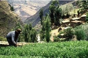 Skogar i bergsområden hotas