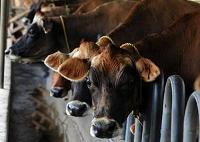 Behov av en effektivare och miljömässigt hållbar animalieproduktion
