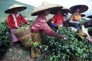 Höga tepriser håller i sig