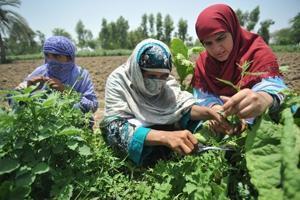 Ny statistisk årsbok från FAO kopplar samman statistik med samhällstrender