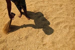 FAO:s matprisindex sjunker kraftigt