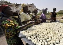 Krafttag krävs för minskade livsmedelsförluster och matsvinn