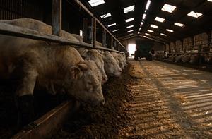 Ny satsning på enhetliga mätmetoder av animalieproduktionens miljöpåverkan