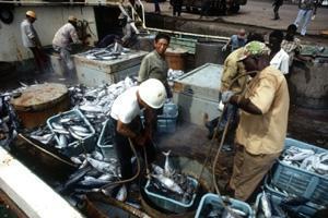 Fiske och vattenbruk – viktiga sektorer som kan bidra med mer