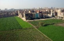 Grönare städer avgörande för en tryggad livsmedelsförsörjning i Afrika