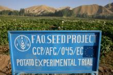 Finansiering av FAO-program ökar med 28 procent