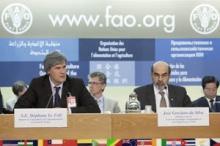 FAO uppmanar till förbättrad samhällsstyrning för en tryggad livsmedelsförsörjning