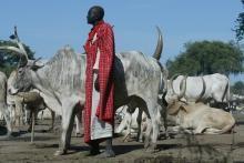 Framsteg gjorts för att stoppa minskningen av genetisk mångfald hos boskap