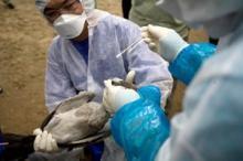 Ökad finansiering från USA för att bekämpa influensa och hot från nya sjukdomar