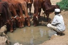 FAO stöd leder till fredlig samverkan mellan jordbrukare och boskapsskötare i Darfur