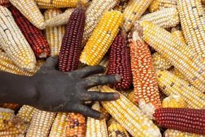 FAO:s matprisindex ner 7 procent under 2012