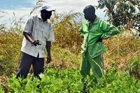 Så frön för en tryggad livsmedelsförsörjning i Sydsudan