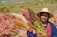 Lansering av det internationella quinoaåret