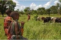 Viktigt att komma till rätta med barnarbete inom boskapssektorn