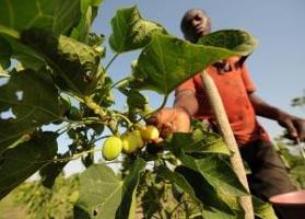 Biobränslecertifiering riskerar att exkludera småskaliga lantbrukare