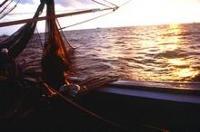 Illegalt fiske bekämpas med nya internationella riktlinjer