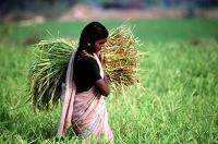 Sambandet mellan kvinnor, våld och tryggad livsmedelsförsörjning betonas på internationella kvinnodagen