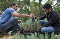 FAO efterfrågar nollvision kring illegal skogsavverkning i medelhavsområdet
