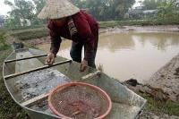 Orsak till omfattande räkdöd i Asien funnen