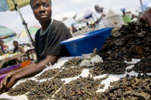 Skogens resurser, inklusive insekter, avgörande i kampen mot hunger