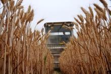 OECD-FAO spår minskad tillväxt för jordbruksproduktionen i världen