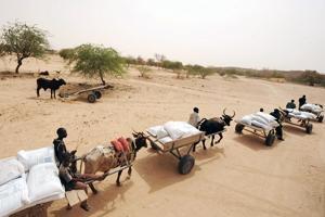 Brådskande med hjälp till torkdrabbade lantbrukare och boskapsskötare i Sahel