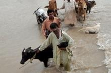 Omedelbara insatser krävs för översvämningsdrabbade jordbrukare i Pakistan