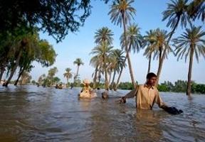 Miljontals boskap döda eller hotade i Pakistan