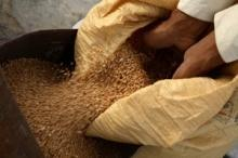 FAO distribuerar stora mängder utsäde i Pakistan