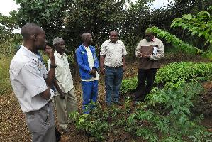 Zambia - Engaging with small scale famers and forestry enterprises