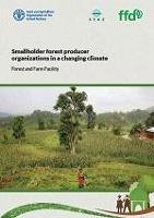 Smallholder forest producer organizations innovate amidst changing climate, study shows