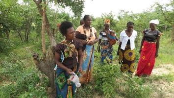Strengthening women's roles in producer organizations to combat rural poverty