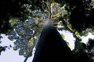 African countries agree to curb illegal timber trade in the Congo Basin