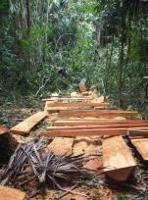 Guatemalan Vice President commits to strengthening forest governance in Southern Petén