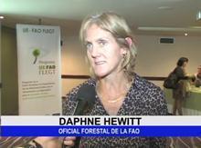 Colombia intensifica sus esfuerzos de sensibilización sobre la gobernanza forestal
