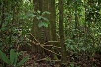 La FAO y el MAE concluyen proyecto para la implementación del Sistema Nacional de Trazabilidad de Productos Forestales