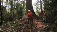 Vidéo : Retraçons l'origine de notre bois