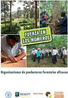 Fuerza en los números: Organizaciones de productores forestales eficaces