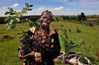 L'ONU rend hommage à des militants, des cinéastes et des photographes au service de la protection des forêts