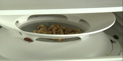 World's first household edible insect farm
