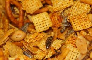 Roasted crickets can be gourmet or life-sustaining food
