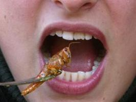 Insects creap into mainstream market