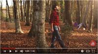 Los bosques, fuente de energía renovable