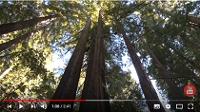 Les forêts: une source d'énergie naturelle