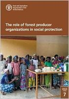 The role of forest producer organizations in social protection