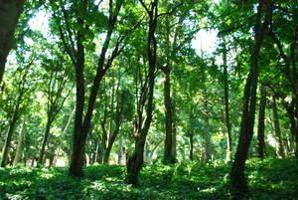 Acuerdo para pago de las reducciones de las emisiones de carbono forestal de Ecuador