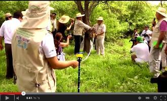 Video: Inventario Nacional Forestal del Perú